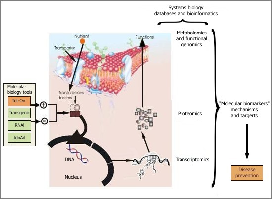 Neuroglia – The Army of The Nervous System